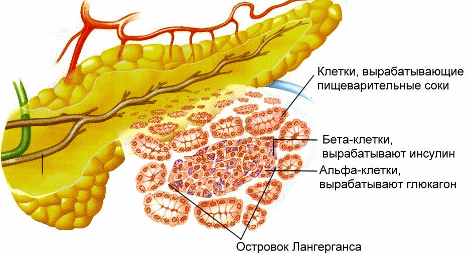 Допустимые нормы сахара в крови пожилого человека