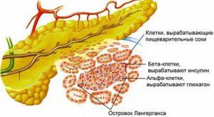 insulinovyj-organ